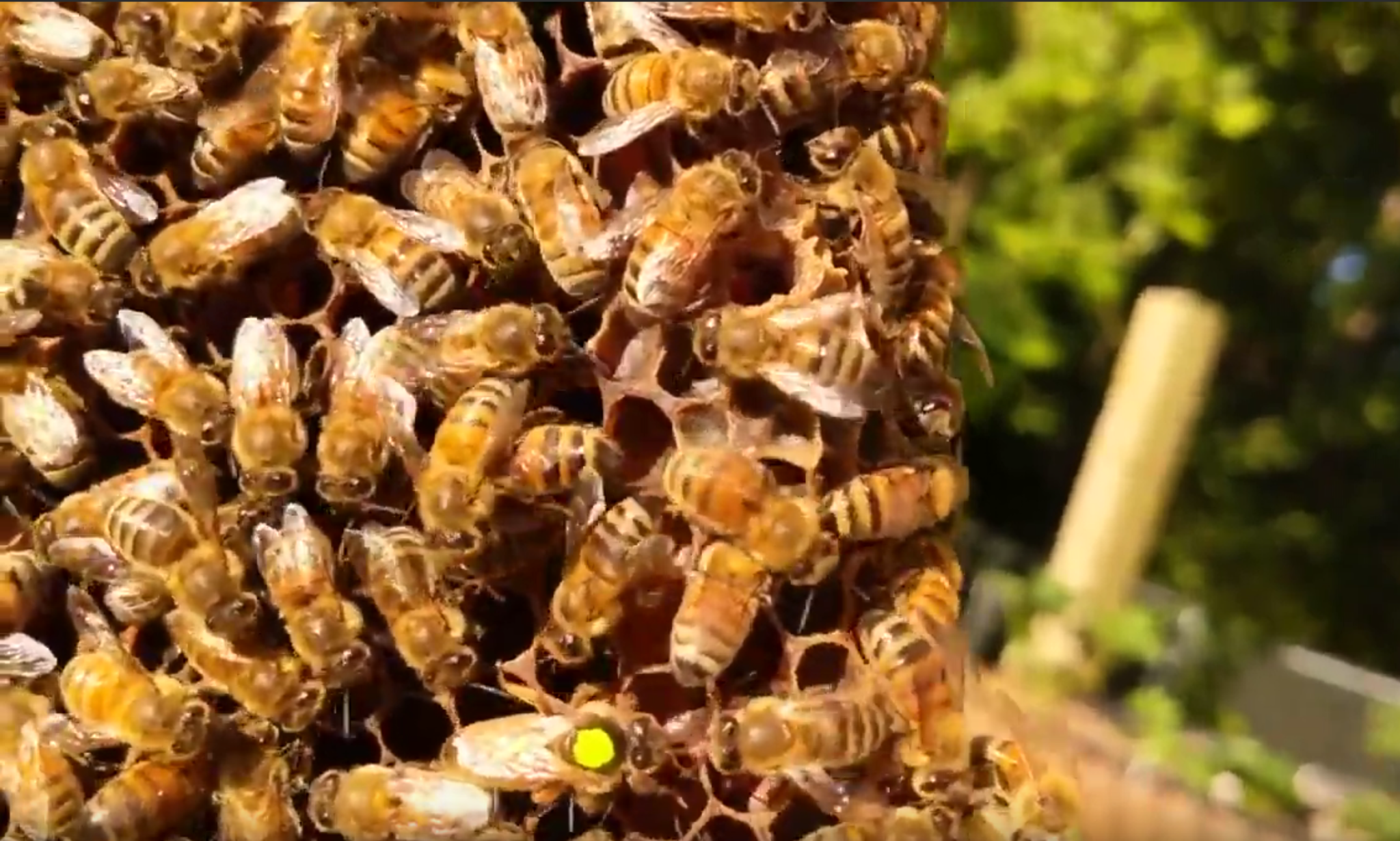 Hive inspection and a new queen